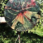 IMG 0225-150x150 in Galerie